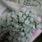 画像1: 有機生豆1kg 2020_21クロップ (1)